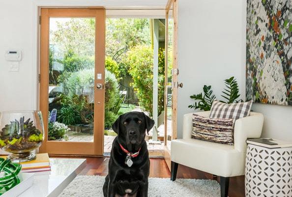 livingroom_puppy-cropped